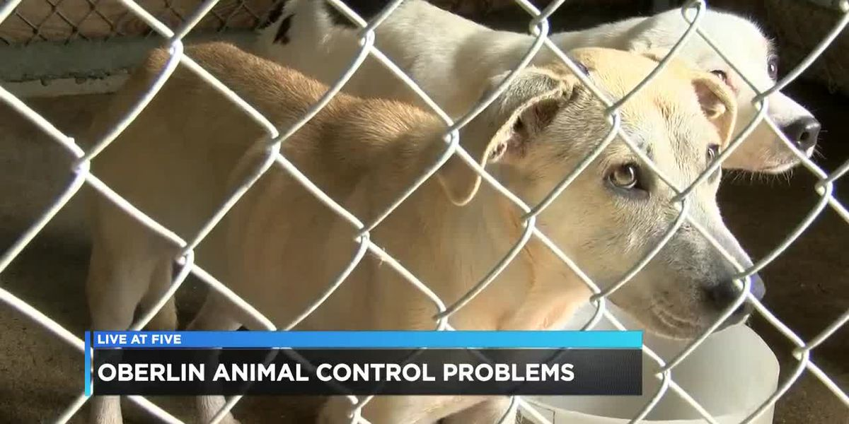 La. Human Society here to help relieve overcrowding at Oberlin pound