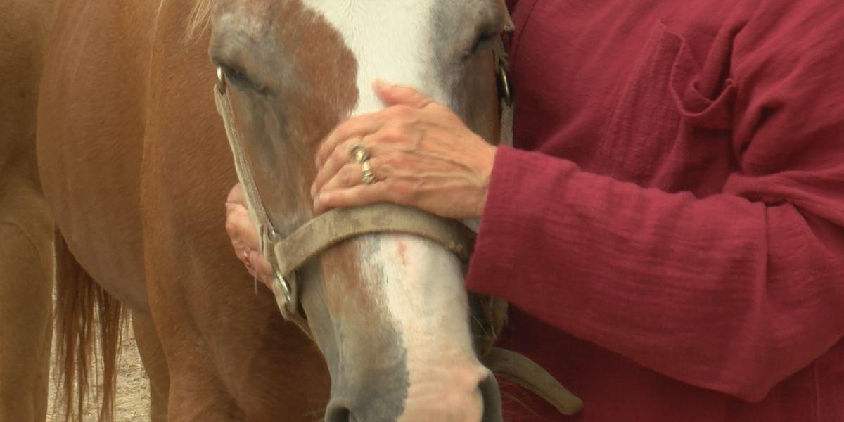 Horses in Gillis survive Hurricane Laura and Delta
