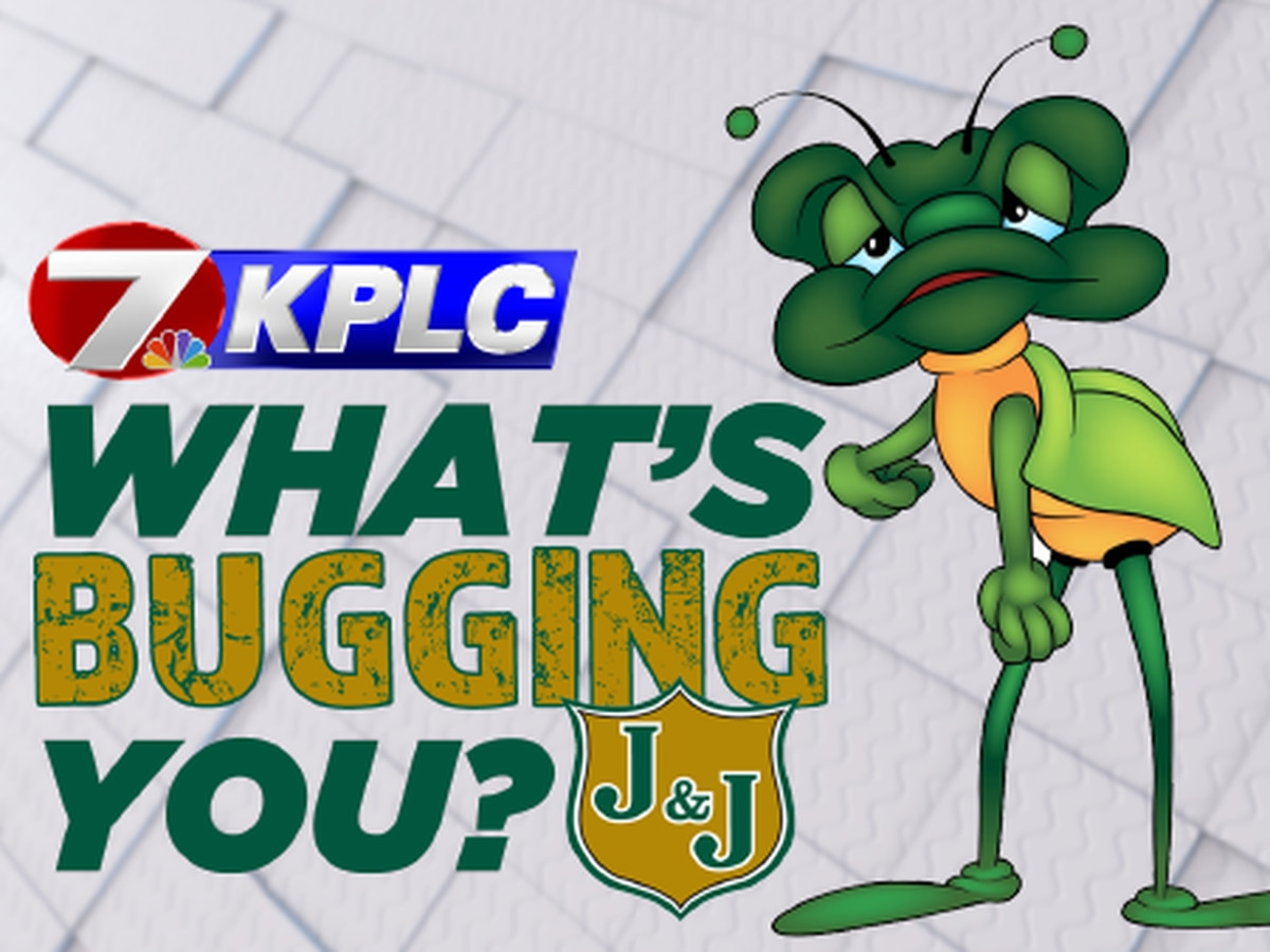 What's Bugging You?