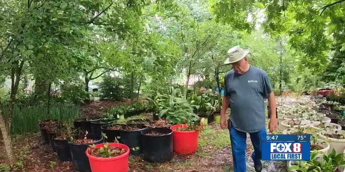 Heart of Louisiana: Live oak arboretum