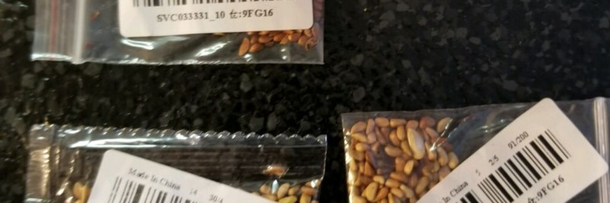 LDAF says mystery seeds from China contain few weeds, diseases
