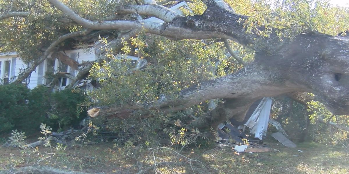 Strong winds cause tree to fall on home