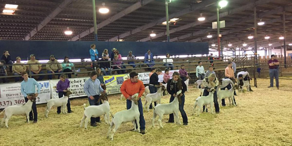 Calcasieu Parish Junior Livestock Show runs through Saturday