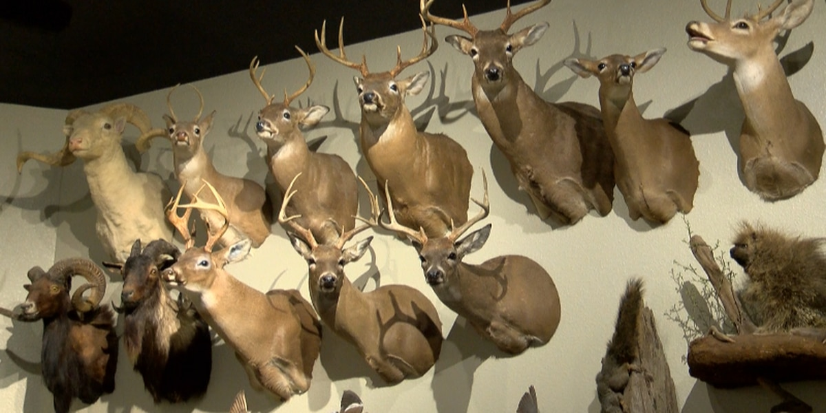 LDWF working to keep Chronic Wasting Disease out of Louisiana