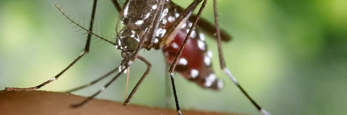 Sixth person in US killed by mosquito-borne disease EEE
