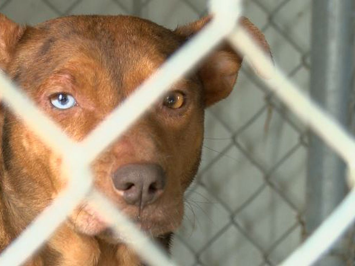 La. Humane Society here to help relieve overcrowding at Oberlin pound