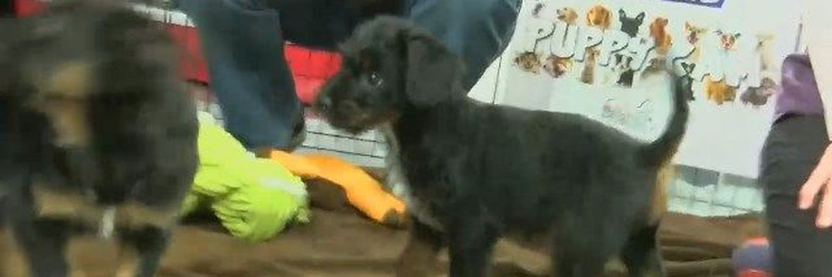LIVE AT 1pm: Gill Bright Animal Hospital Puppy Cam