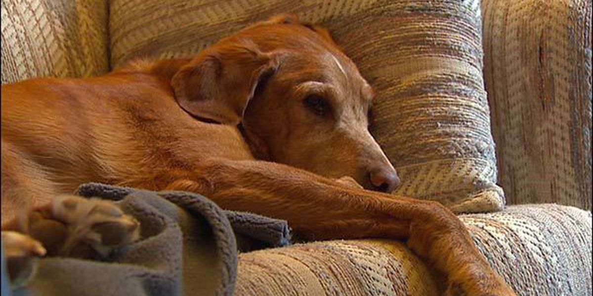 Barking dog could cost woman her home