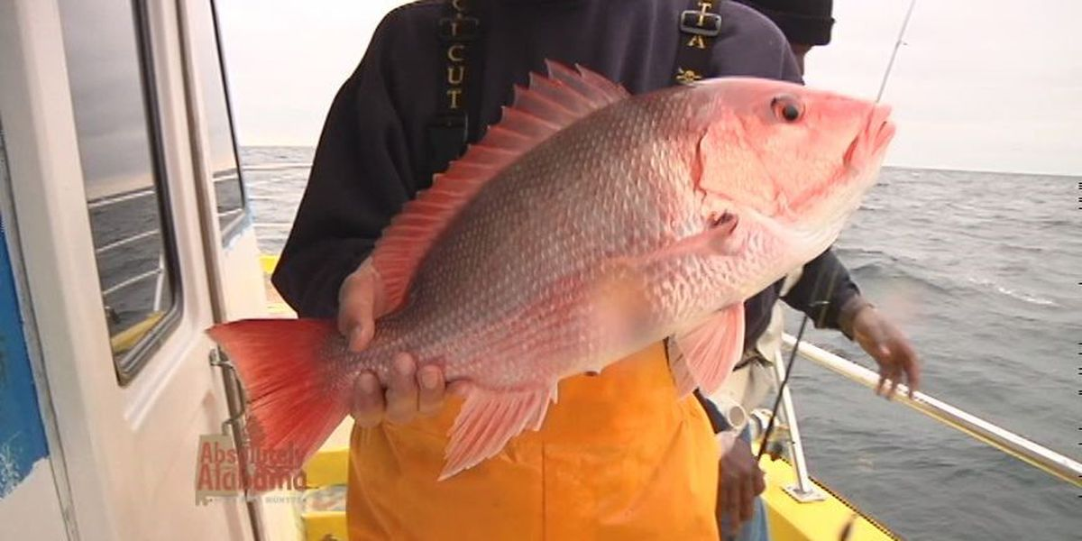 Snapper landing estimates released by Wildlife and Fisheries