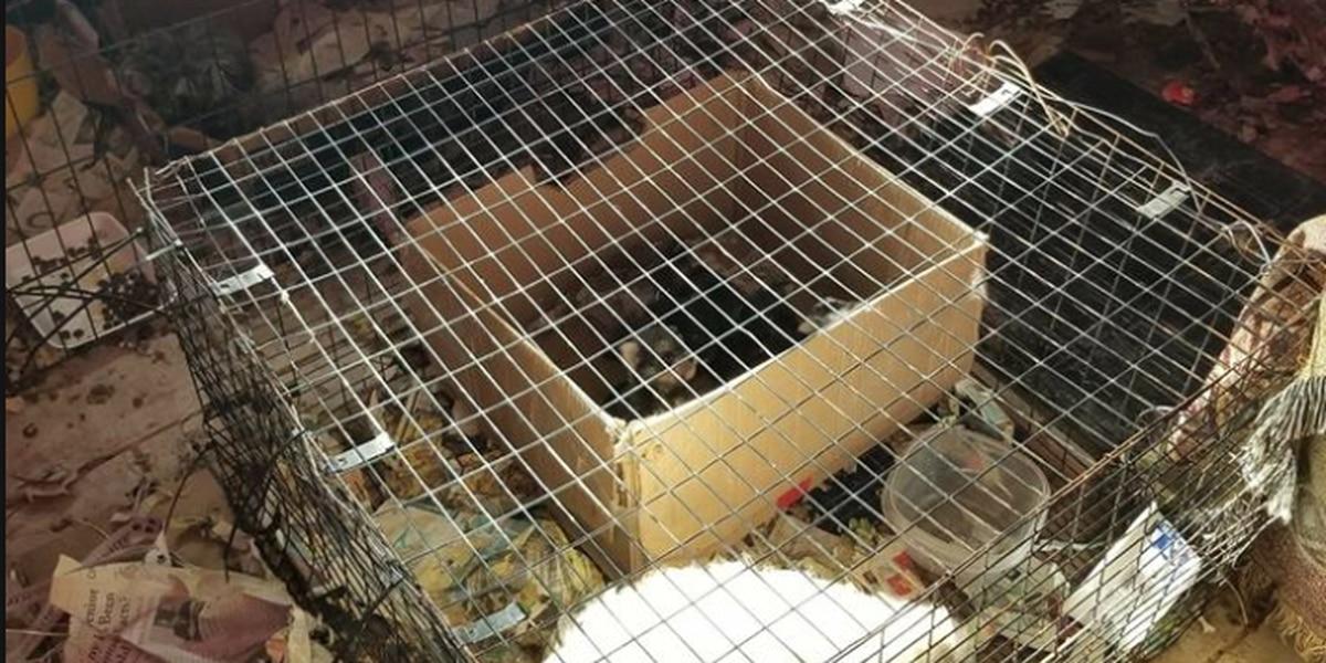 47 dogs rescued in Allen Parish