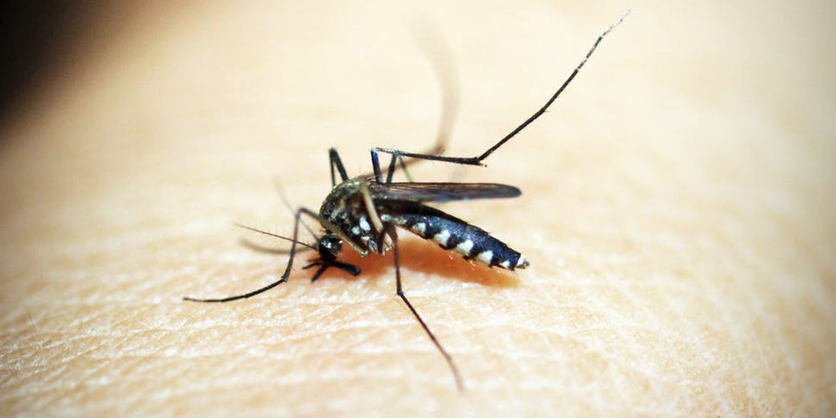 Mosquito Control reminds residents to wear repellent after West Nile found in two sample pools