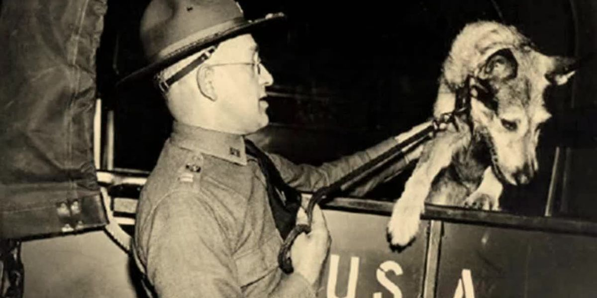 Hometown Hero: WWII Service Dogs