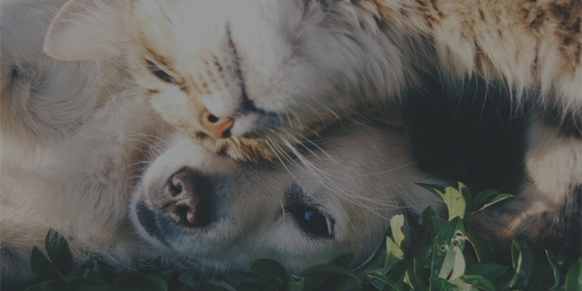 10 things you should know before adopting a pet