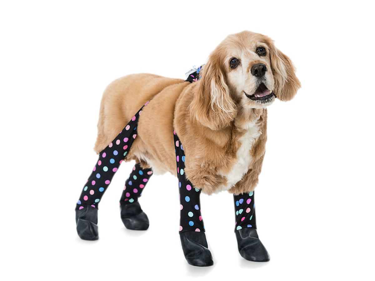 Now pets can rock leggings just like their humans