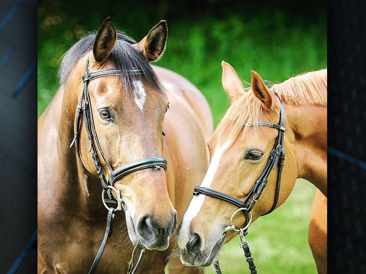 Horses in La. test positive for Eastern Equine Encephalitis, West Nile Virus