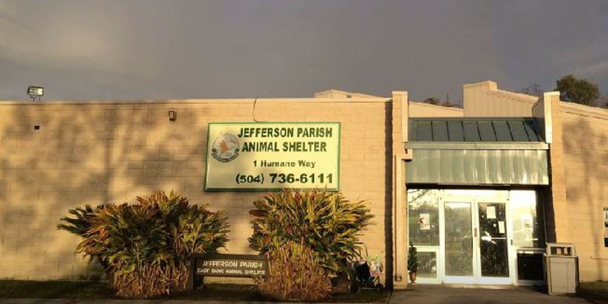 Three top officials fired after investigation into Jefferson Parish Animal Shelter