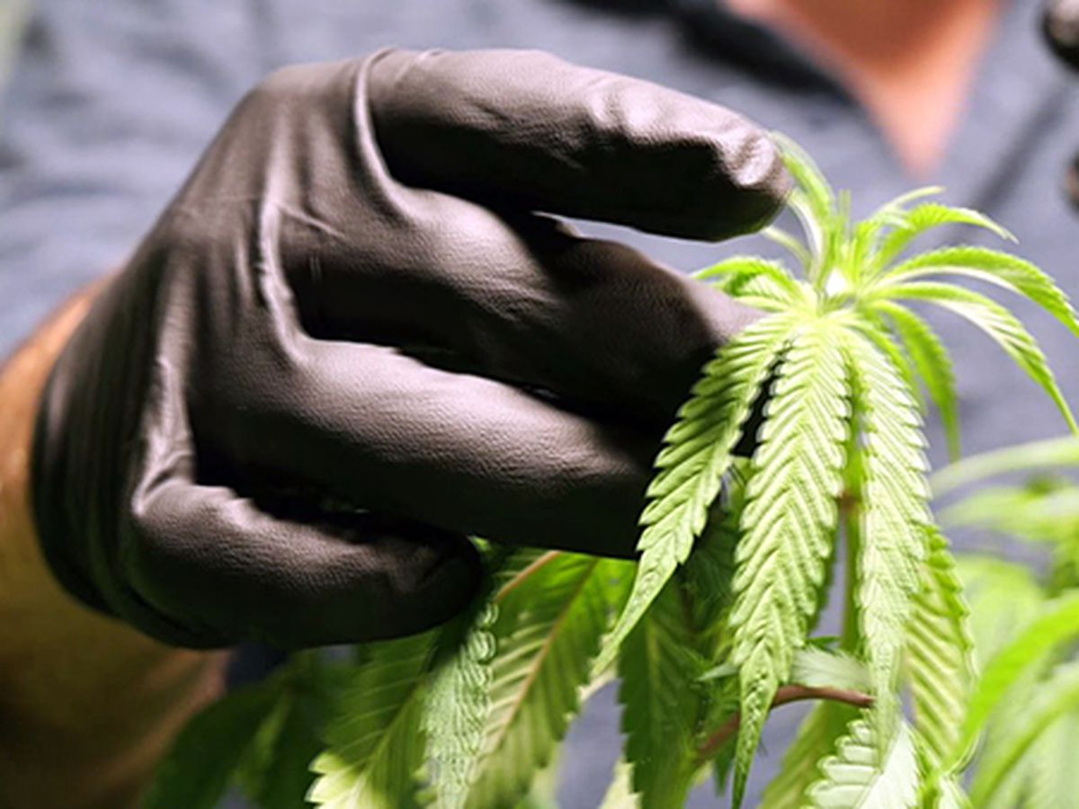 Medical marijuana expansion nears final passage in Louisiana
