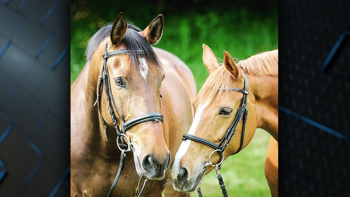 Horses in La. test positive for Eastern Equine Encephalitis, West Nile Virus