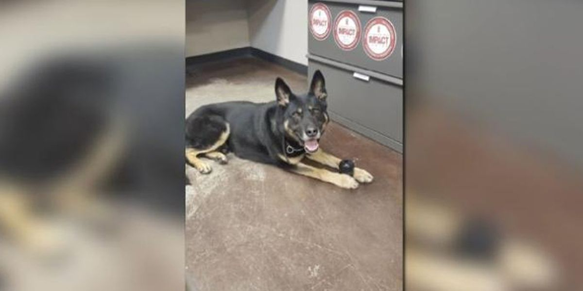 Lost Kansas K-9 bites 14-year-old boy