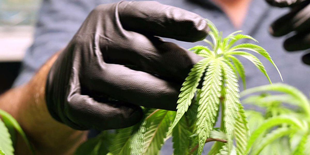 La. Board of Medical Examiners votes to eliminate patient limit for licensed medical marijuana doctors