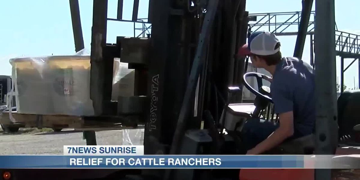 Cattle ranchers in Calcasieu, Cameron receive some relief