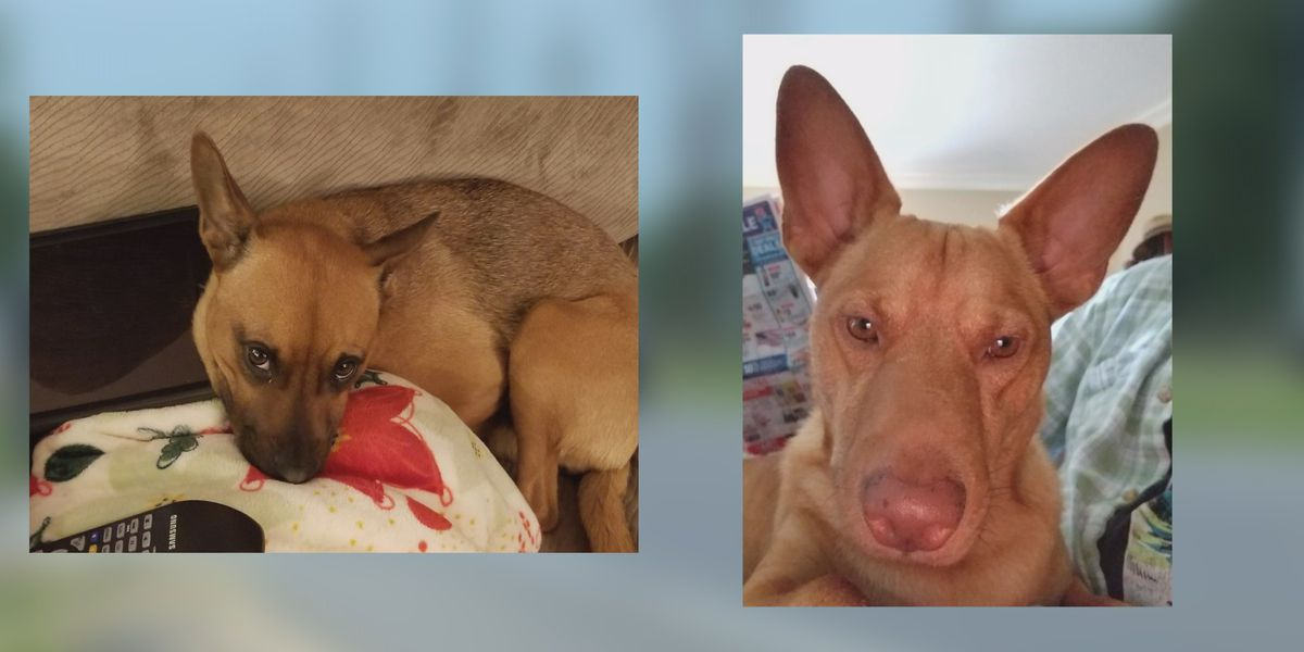 Two dogs killed in hit and run, Calcasieu Parish Sheriff's Office looking for drivers involved