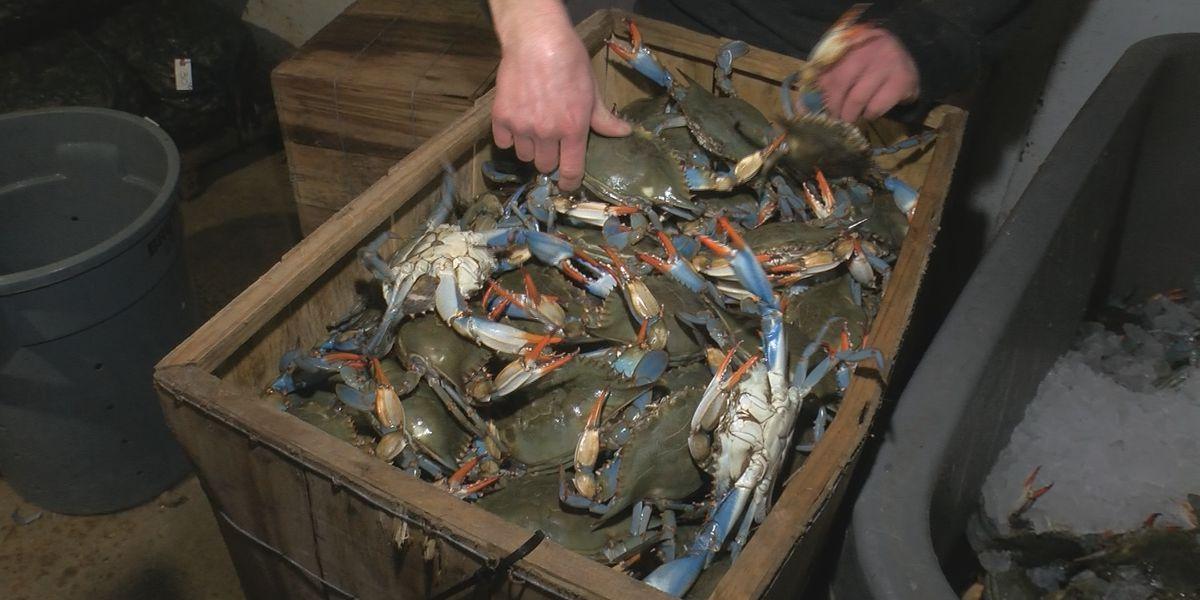 Louisiana Lt. Gov. to push for legislation for increased seafood testing