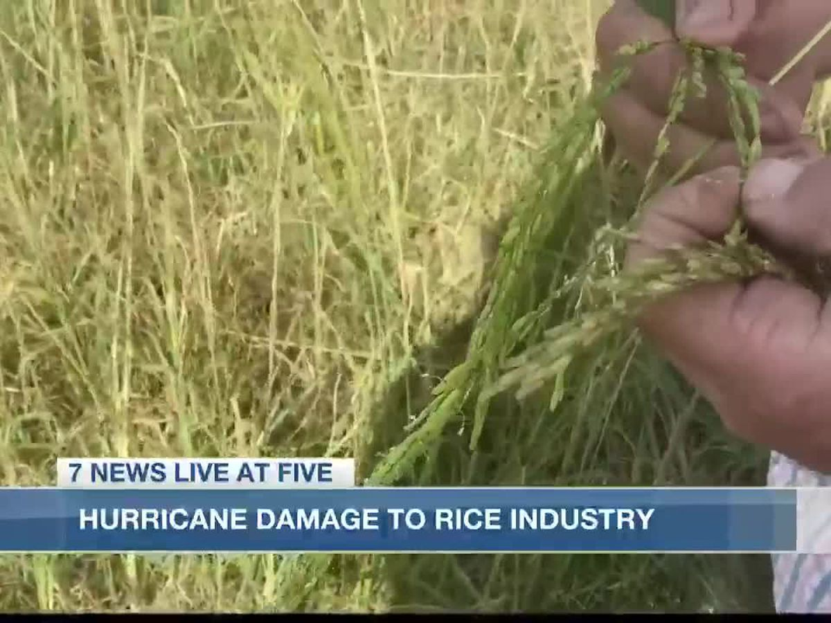 Rough year for rice farmers after hurricanes Laura and Delta