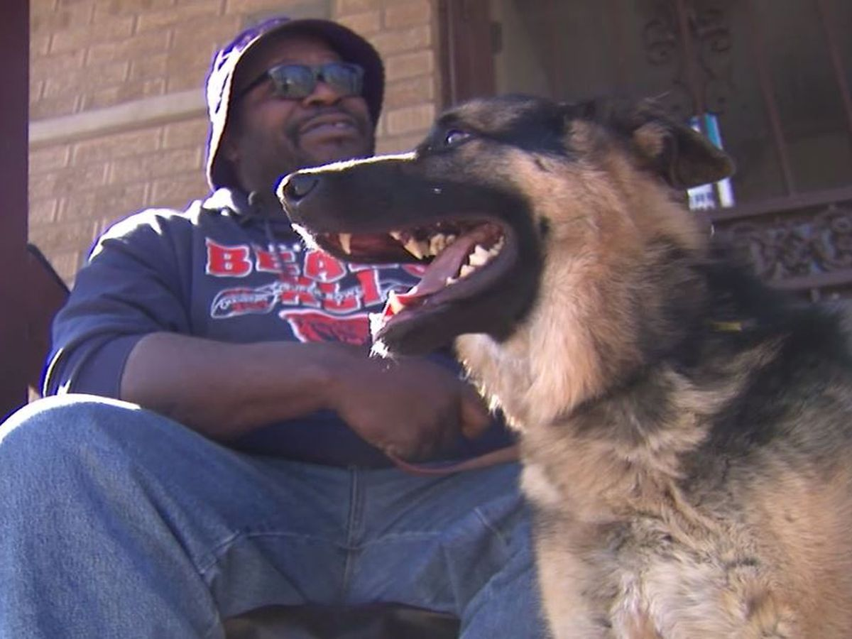 Teen brings back stolen service dog after blind owner pleads for return