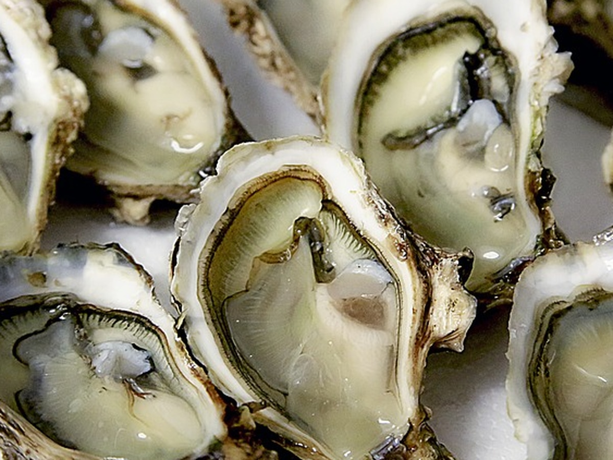 Cameron company accused of illegally harvesting oysters from Calcasieu Lake