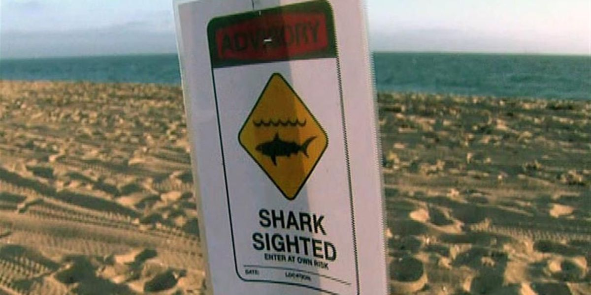Drones tracking sharks