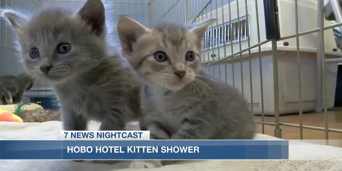 Hobo Hotel hosts kitten shower