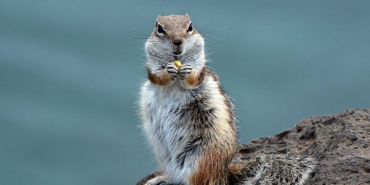 Hallelujah: It's the great Alabama 'Squirrel Revival'