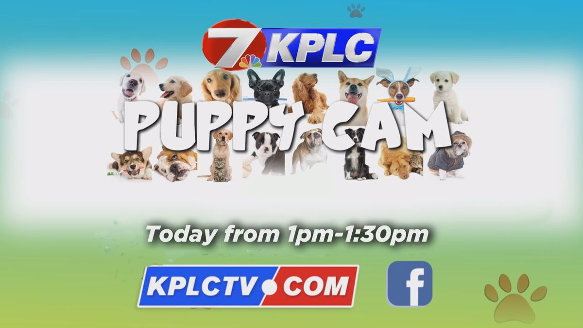 LIVE AT 1 p.m.: KPLC Kitty Cam