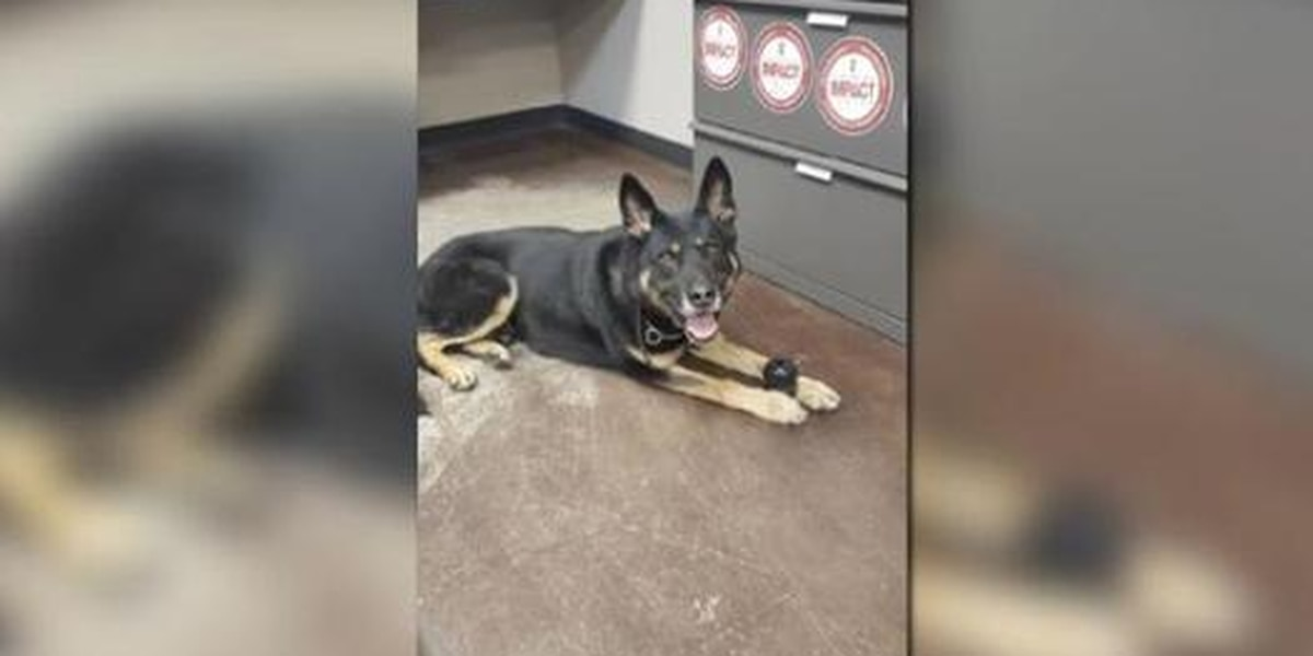 Lost K-9 bites 14-year-old Kansas boy