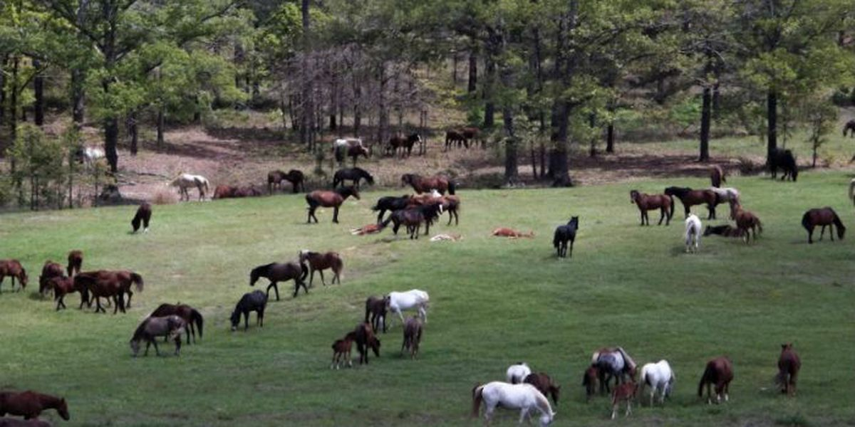 Fate for horses at Fort Polk?