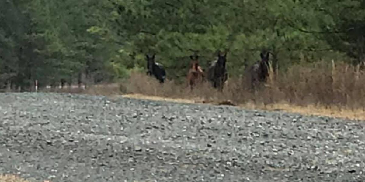 Five horses shot and killed near Fort Polk