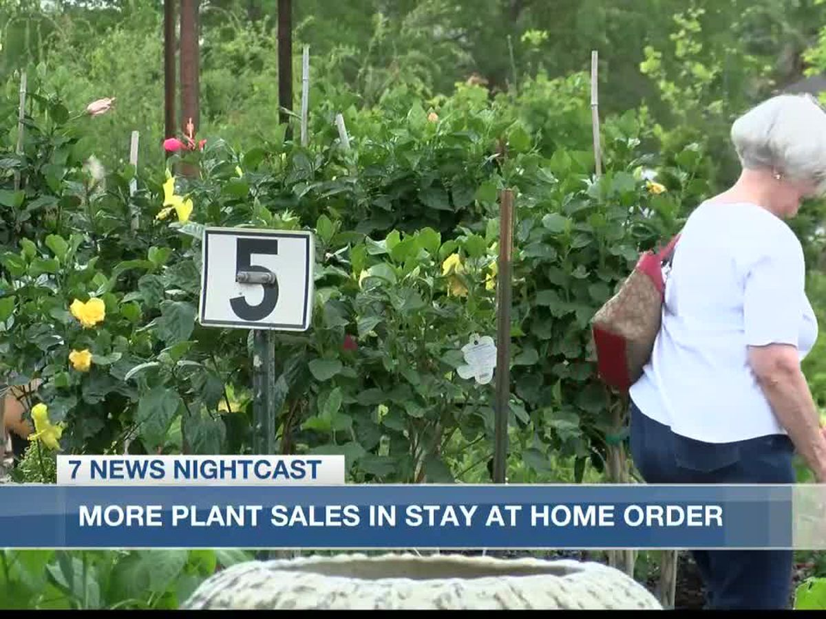 Increase in plant sales due to stay-at-home order