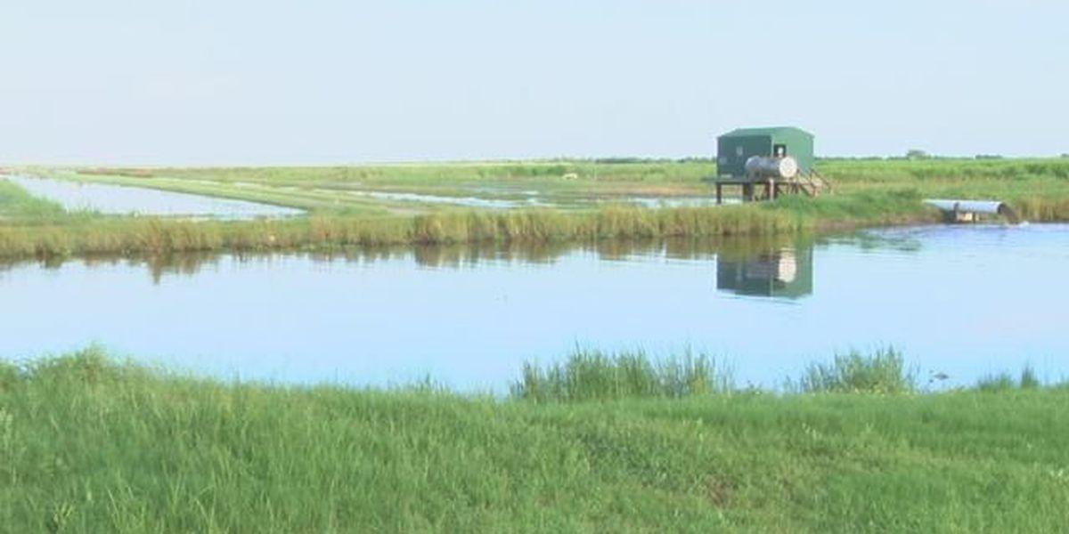 Prescribed burn at Cameron Prairie National Wildlife Refuge