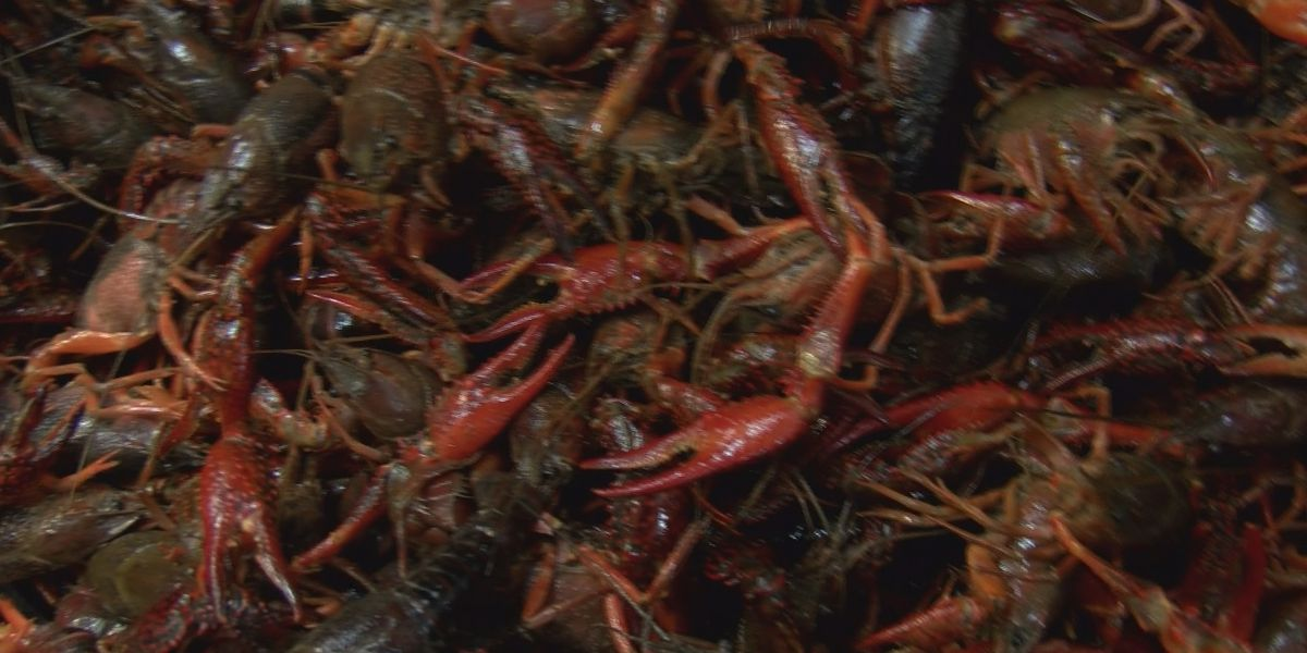 Man steals 16 sacks of crawfish from back of truck