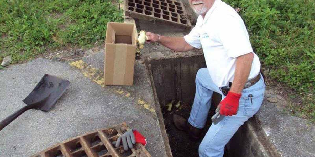 Lake Charles man comes to rescue of ducklings