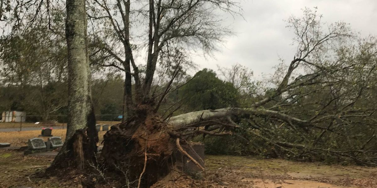 Severe weather knocks down trees, power lines in parts of Southwest Louisiana
