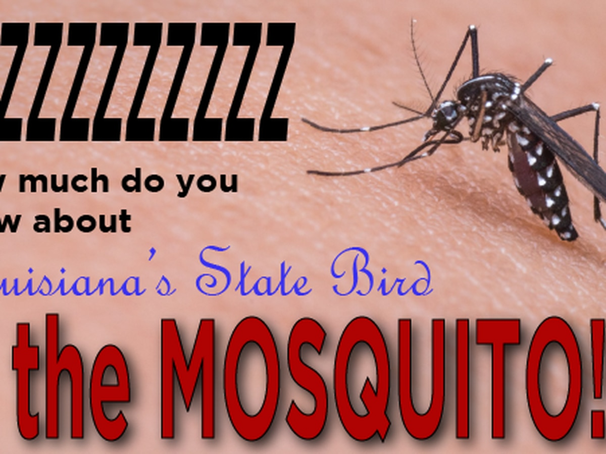 TAKE THE QUIZ: How much do you know about the mosquito?