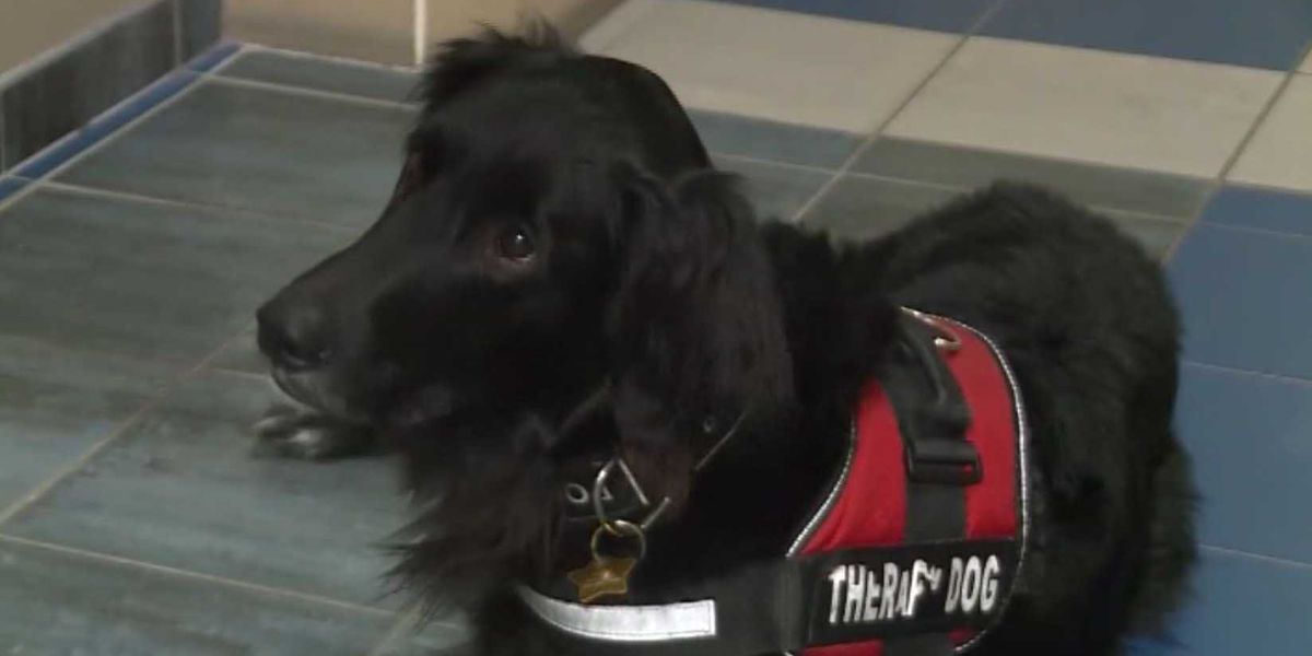 Therapy dog helps students at missing WI teen's school