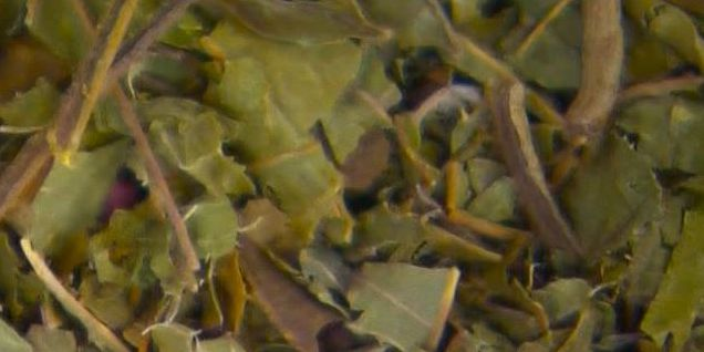 Herbal supplement kratom linked to more US deaths than previously known