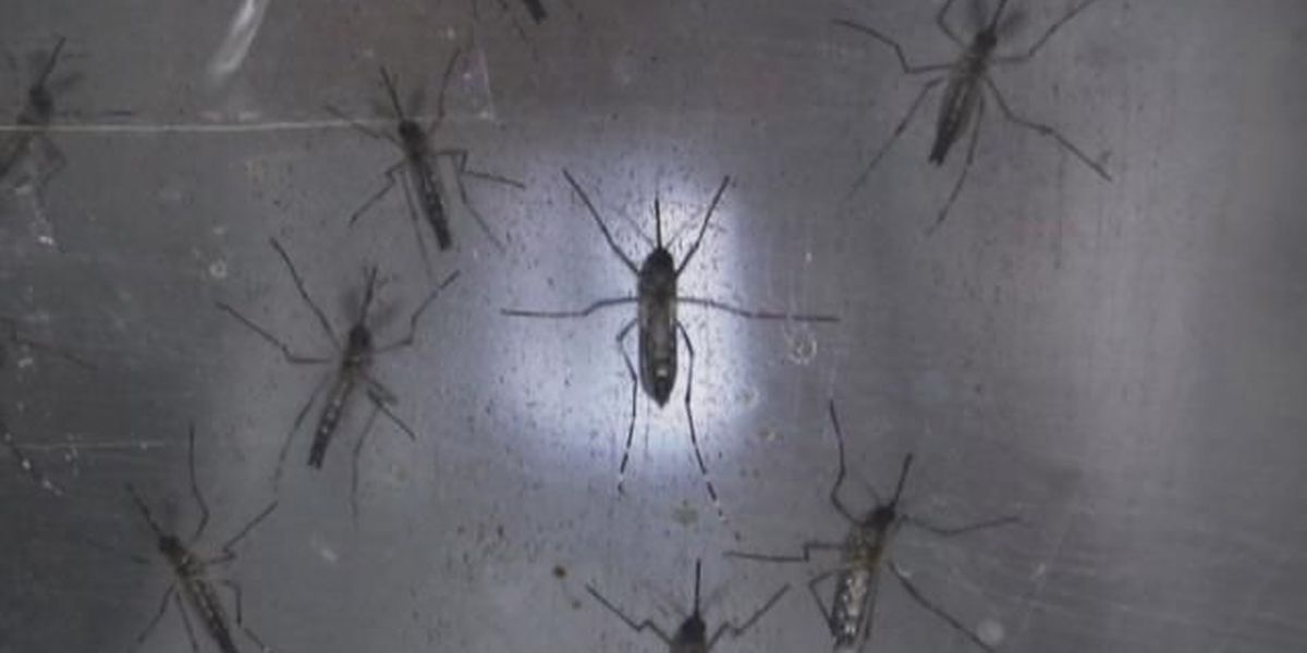 Four states now reporting Zika virus infections