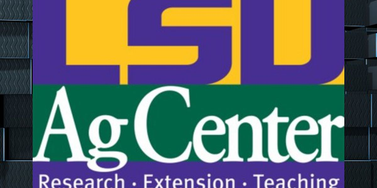 LSU AgCenter asks farmers to take survey on COVID-19 effects