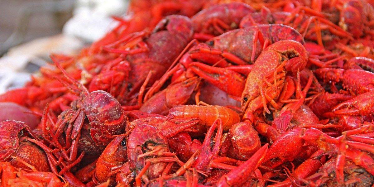 Crawfish Festival begins Friday
