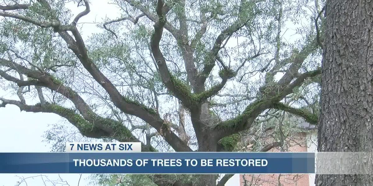 Acorns of Hope plans to plant thousands of trees in SWLA
