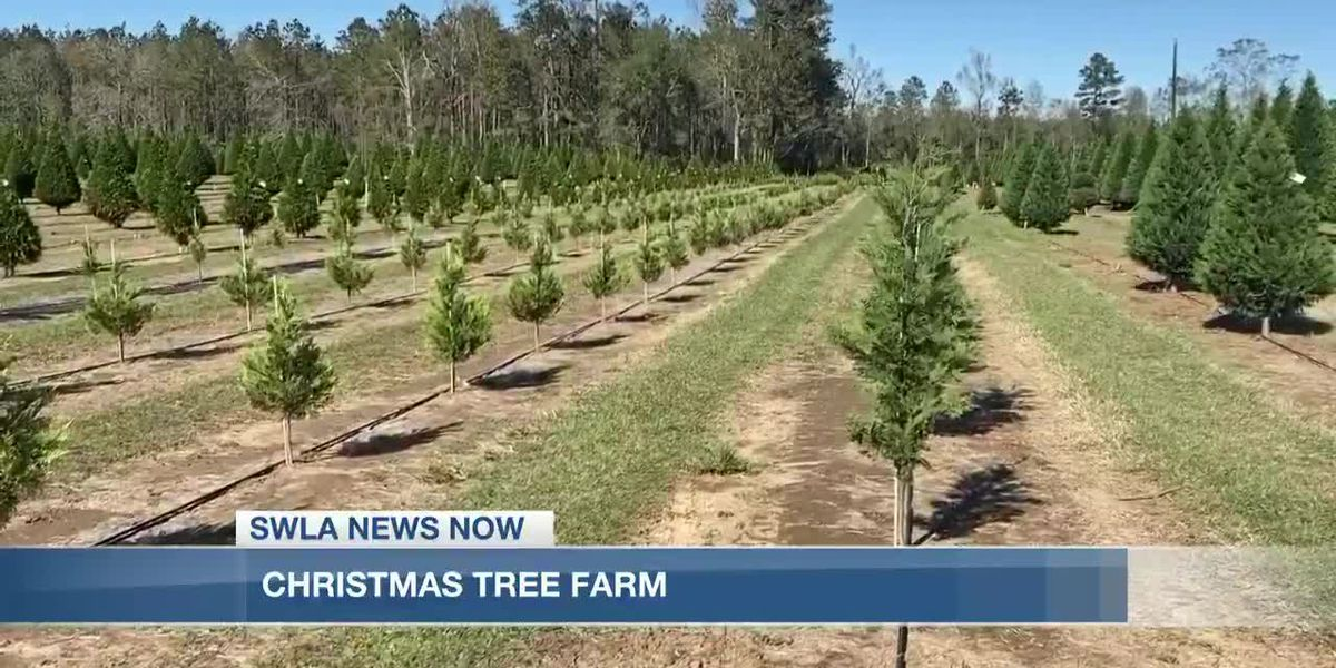 Grant Christmas Tree Farm suffers loss of trees in the aftermath of hurricanes